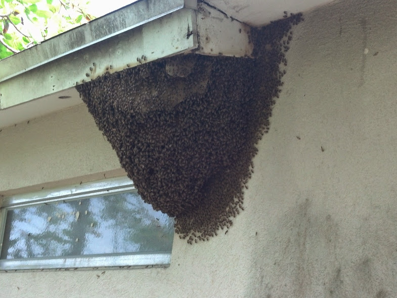 Bee removal Clearwater