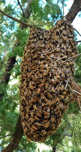 Bee Removal St Pete