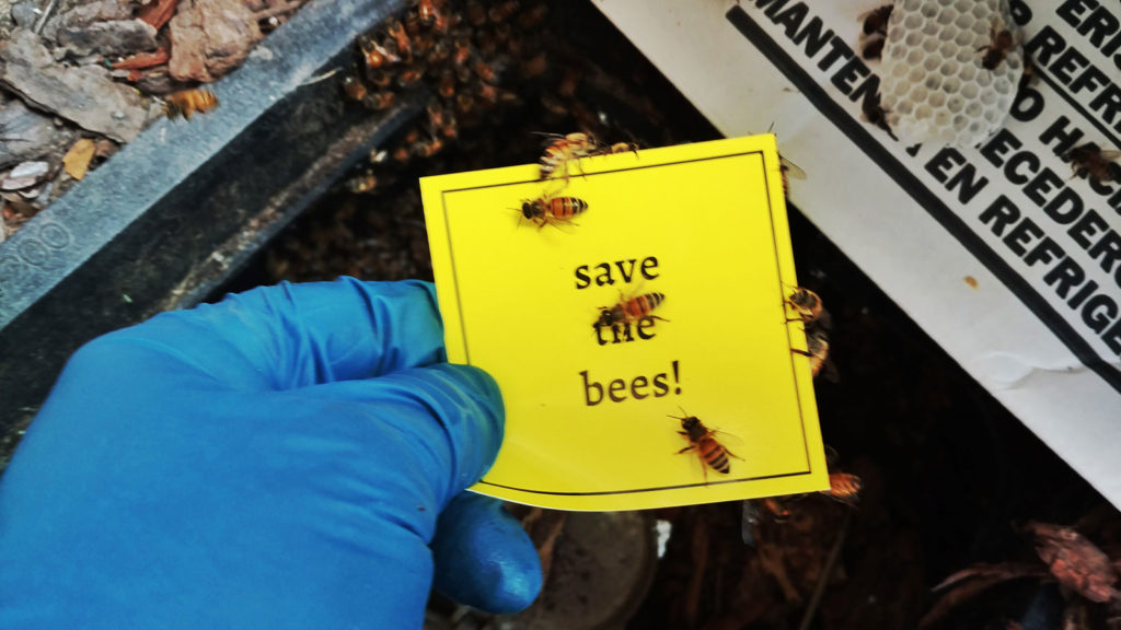 Bee removal Palm Harbor