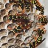 Wasp Removal in Winter Haven, Florida