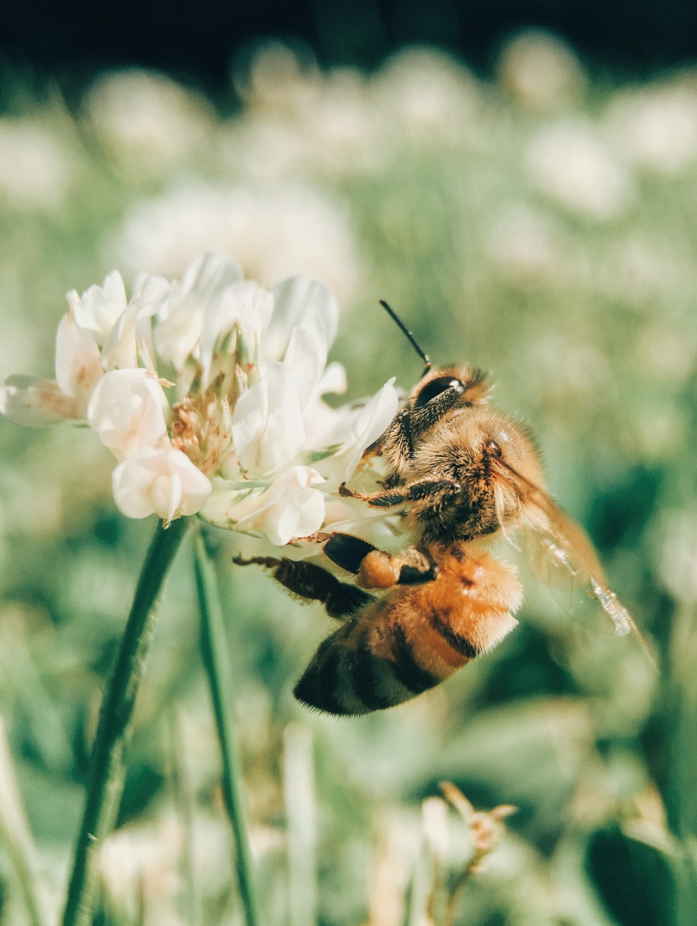 Bee Removal FL