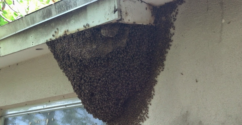 Bees in house