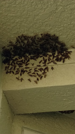 Wasp Control in Clearwater, Florida