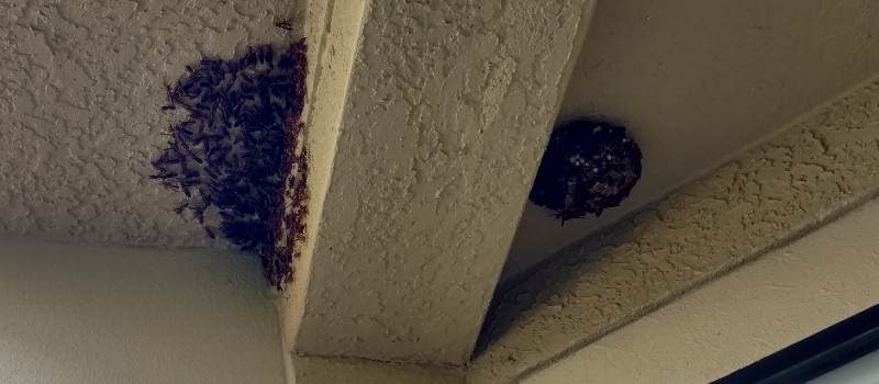 Wasp Nest Removal in Sarasota, Florida