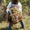 Beehive Removal in Clearwater, Florida