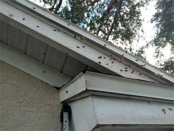 Bees in Your House? How to Get Them Out and Keep Them from Returning