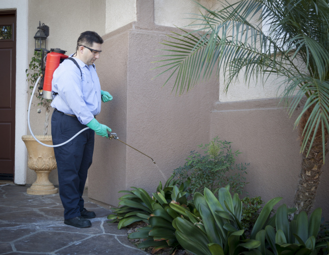 Three Reasons to Use Professional Pest Services