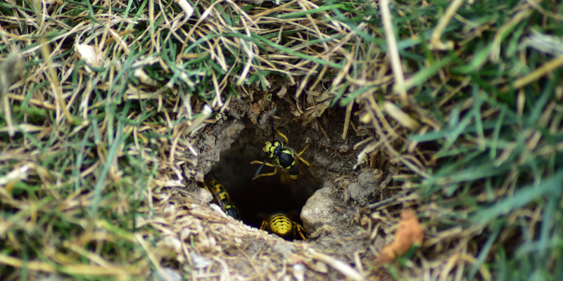 best practices when it comes to yellow jacket nest removal
