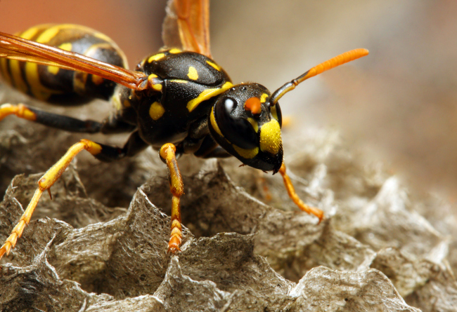 Get Rid of Wasps for Good with Wasp Removal