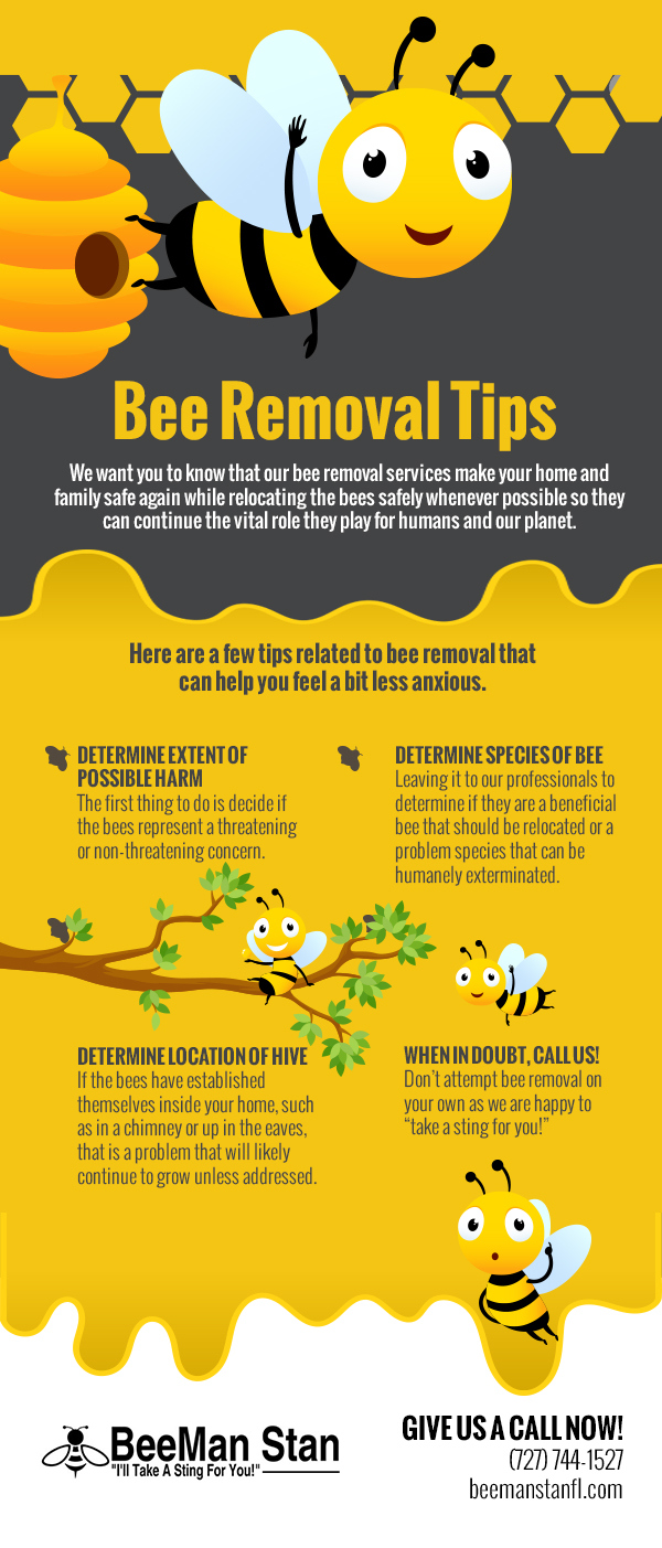 Bee Removal Tips [infographic]
