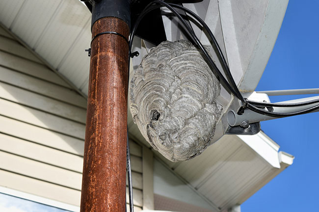 Things You Shouldn't Do When You Need Wasp Nest Removal